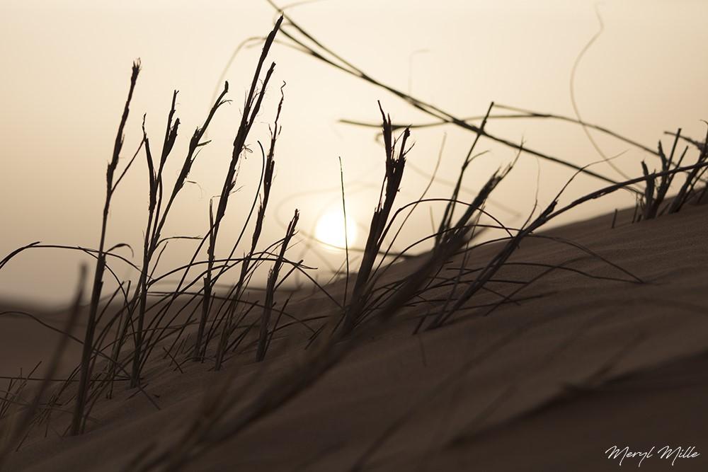thumbnail_Soleil-du-desert_1000px